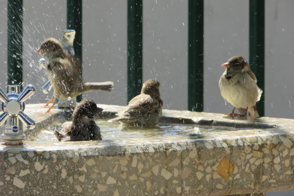 מקלחת לכבוד שבת